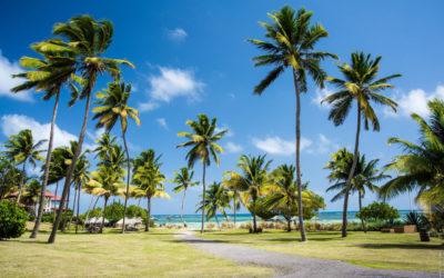 Location d'une voiture 7 places en Martinique, quelles offres proposées ?