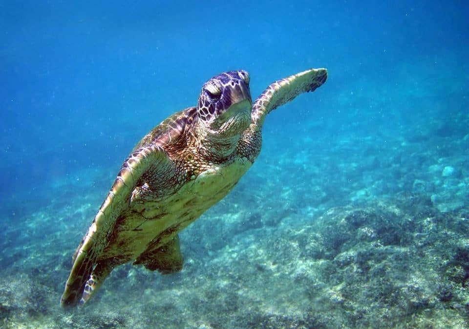 Les sites de plongée incontournables en Guadeloupe
