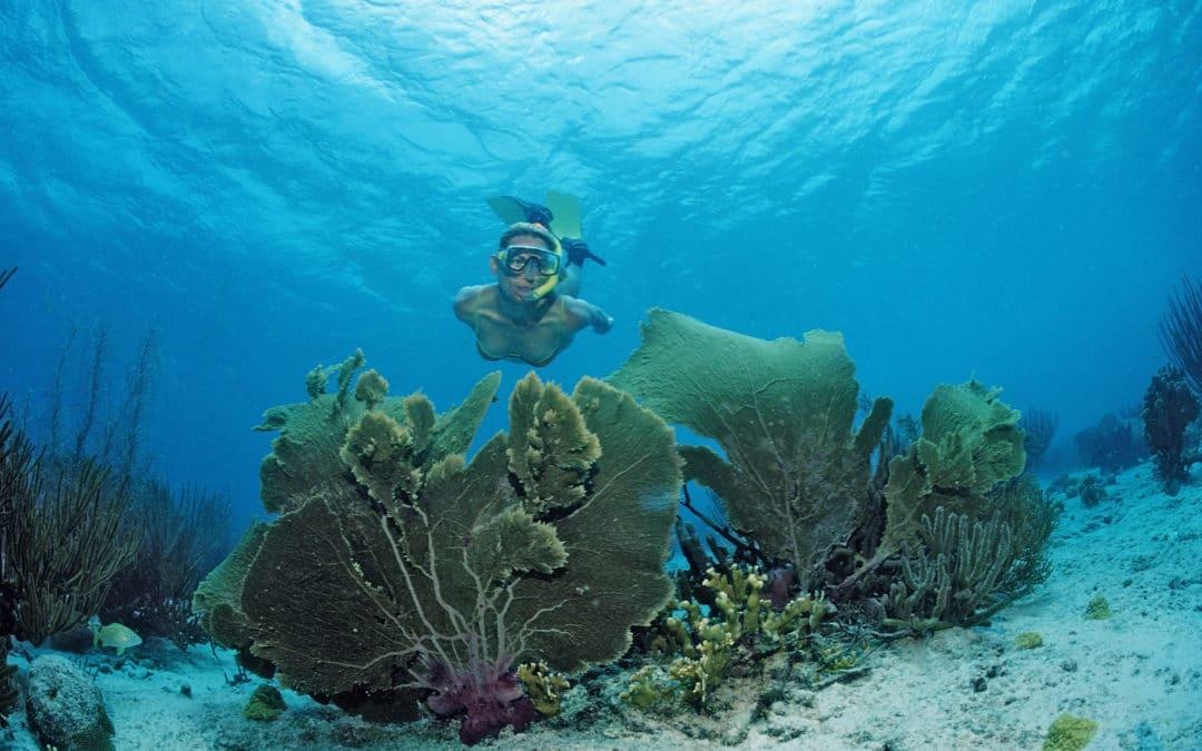 Visiter la Guadeloupe et faire une activité PMT au top !