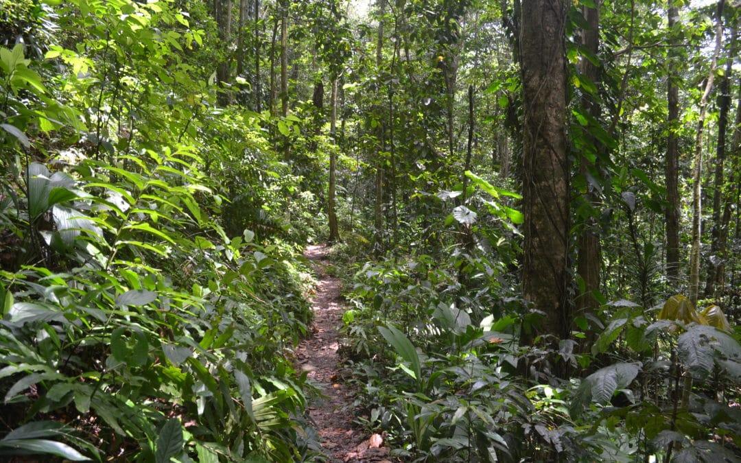 Visiter la Guadeloupe et sa généreuse forêt tropicale !
