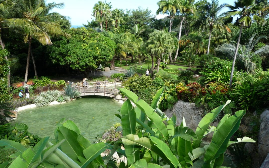 Découvrir des sites inoubliables en Guadeloupe