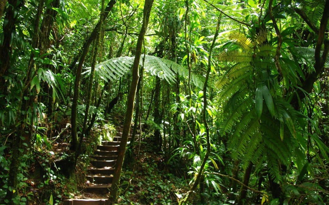 Visiter la Guadeloupe et découvrir les randonnées à faire